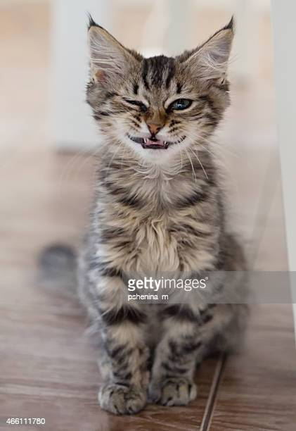 Smiling Cat. Small depth of field