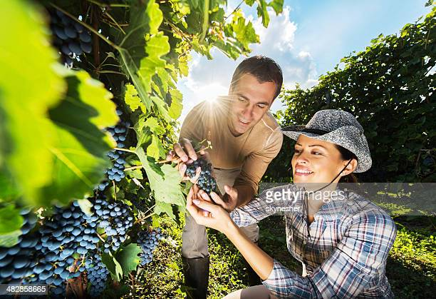 Smiling couple in vineyard.