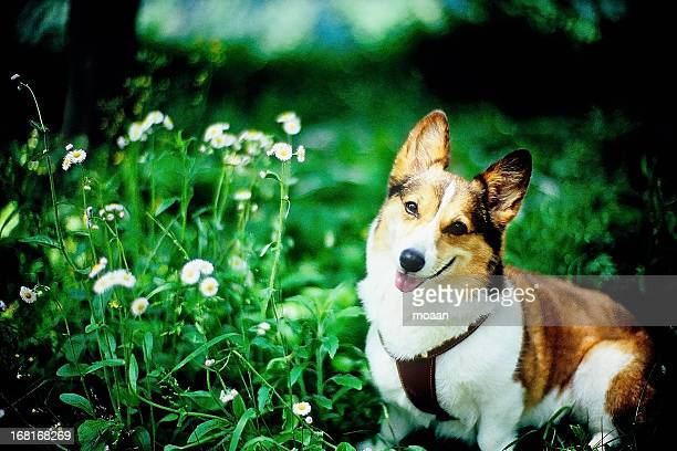 Smiling Dog and Wild Flowers