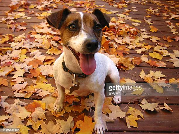 Souriant Chien dans la journée d'automne