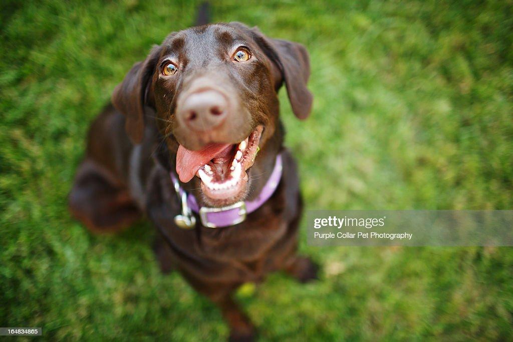 Smiling Dog Looks Up