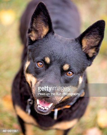 Smiling Dog : Stock Photo