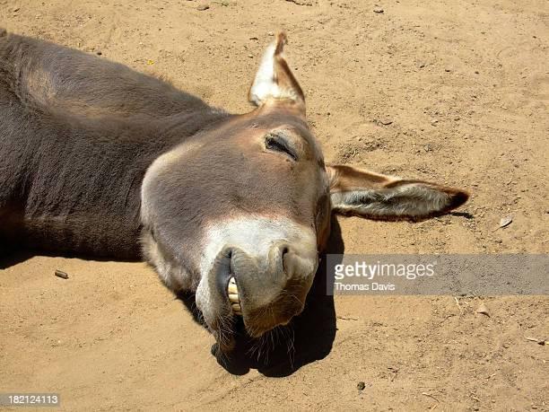 Smiling Donkey
