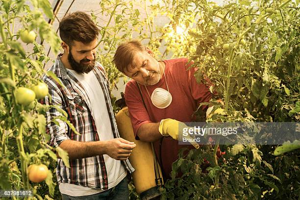 Smiling farm workers working with plants in a greenhouse.