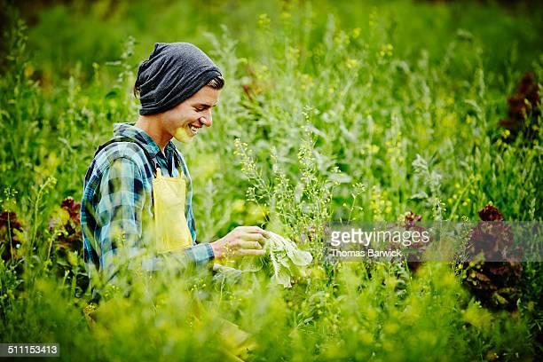 Smiling farmer in field examining head of lettuce
