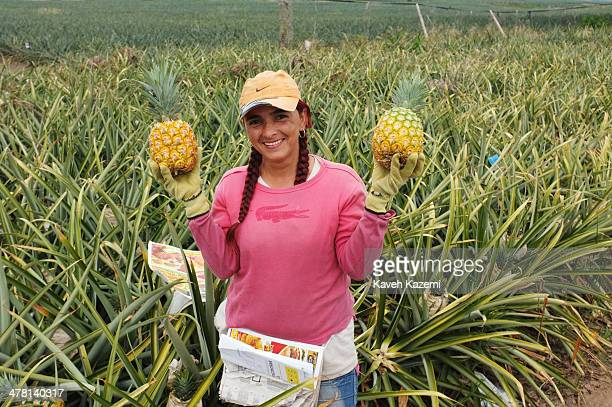 A smiling female laborer holds two harvested pineapples while working on a large pineapple plantation on January 17 2014 outside Pereira Colombia