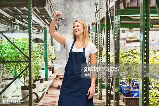 Smiling florist holding drug in marijuana plant : Stock Photo