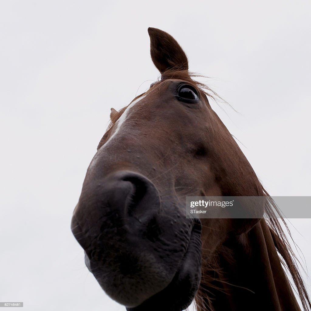 Uncategorized Smiling Horse smiling horse stock photo getty images photo