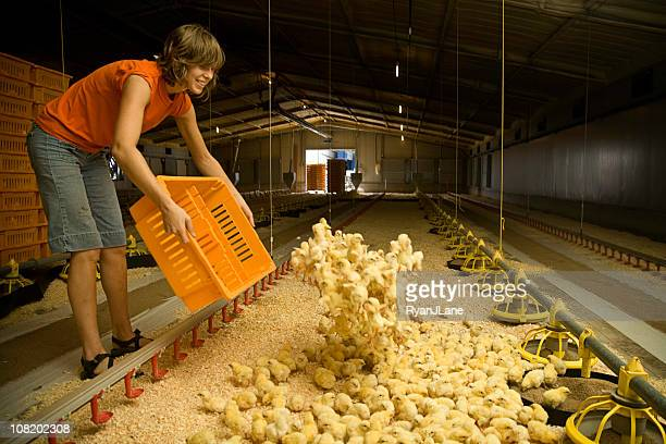 Smiling Laborer Working on a Chicken Farm