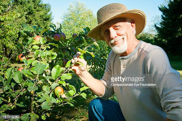 Smiling senior man picking apples in garden