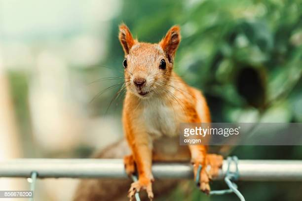 Smiling Squirrel sitting on a metallic pole near balcony