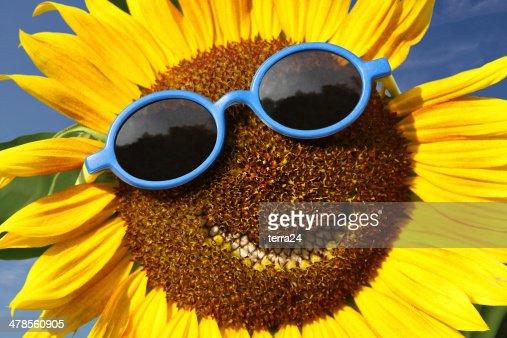 Smiling sunflower : Stock Photo
