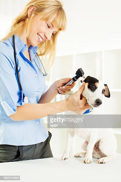 Smiling Vet Doing An Ear Exam to dog.