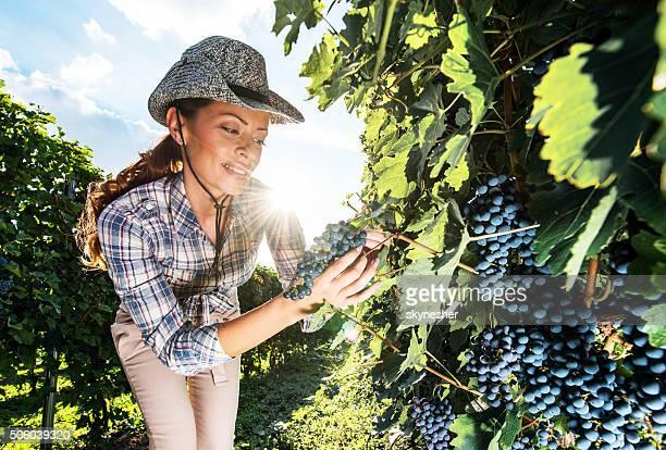 Souriant le vintner examiner raisins dans un vignoble.
