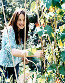 Smiling Woman Holding a Basket Picks Broad Beans From a Plant in Her Garden