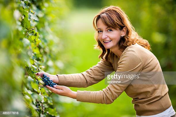 Smiling woman picking grapes in vineyard and looking at camera.