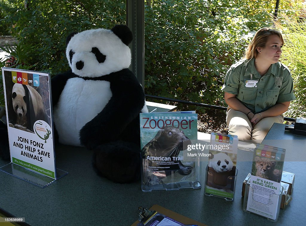Smithsonian National Zoo worker Alison Venable works at a booth near the Giant Panda exhibit following the sudden death of a baby panda cub at the National Zoo on September 23, 2012 in Washington, DC. The giant panda cub that was born a week ago died suddenly this morning and zoo officials have not yet determined the cause of death.