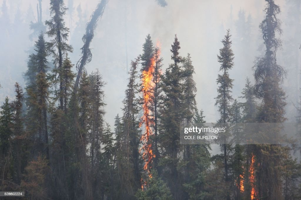 Smoke and flames engulf trees along the highway near Fort McMurray, Alberta, on May 6, 2016. Canadian police led convoys of cars through the burning ghost town of Fort McMurray Friday in a risky operation to get people to safety far to the south.In the latest chapter of the drama triggered by monster fires in Alberta's oil sands region, the convoys of 50 cars at a time are driving through the city at about 50-60 kilometers per hour (30-40 miles per hour) TV footage showed. / AFP / Cole Burston