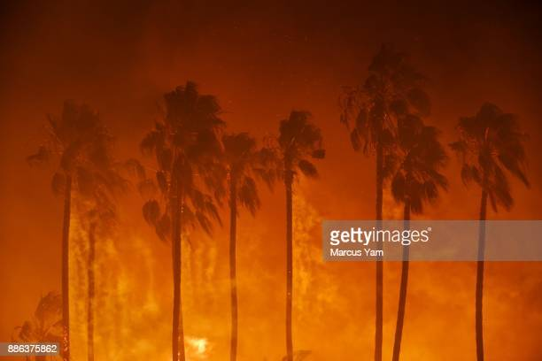 Smoke blows out of the burning palm trees as brush fire threaten homes on December 5 2017 in Ventura California