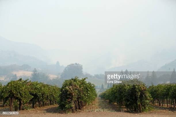 Smoke from the Tubbs Fire covers rows of grape vines on October 11 2017 in Kenwood California In one of the worst wildfires in state history more...