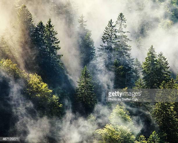 Smoky forest