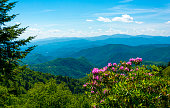 A view with rhododendron and woodland to the Smoky Mountain range in Tennessee, USA.