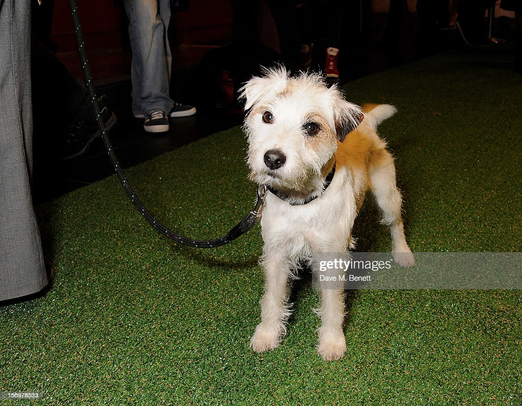 Smurf the Dog attends the UK Premiere of 'Sightseers' in association with Stella Artois at the London Transport Museum on November 26, 2012 in London, England.