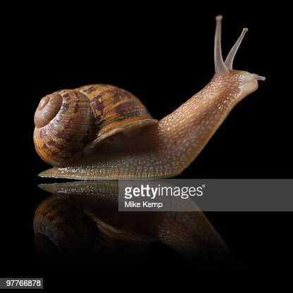Snail and reflection