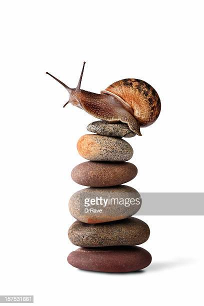 Snail climbing to the top of a pebble stack