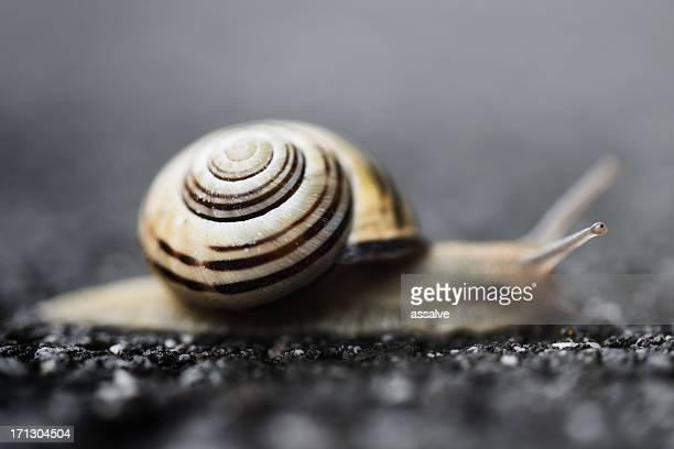 Snail crawling on asphalt at rainy day