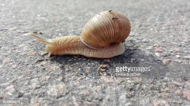 Snail crawling on ground
