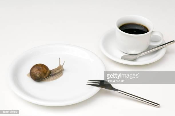 Weinbergschnecke Krabbeln auf weißen Teller und Kaffeetasse in der Nähe