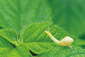 Snail crawling over leaves