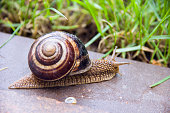 Snail in macro close-up blurred background