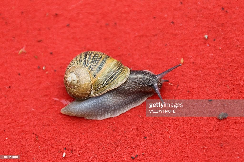 A snail is seen on the red carpet at the 63rd Cannes Film Festival on May 19, 2010 in Cannes.