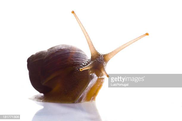 Snail look at you
