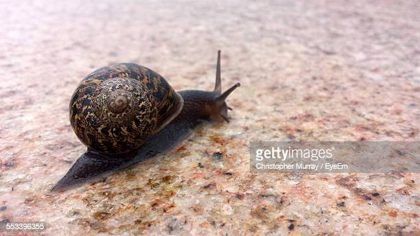 Snail Moving Along Textured Surface