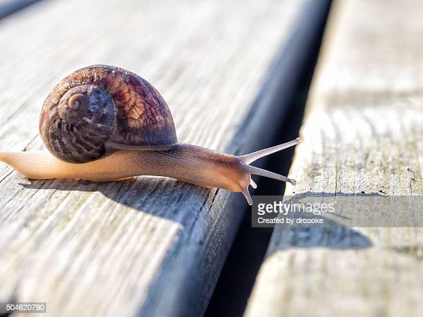 snail on a boardwalk