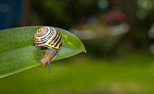 snail on a leaf isolated on a garden background