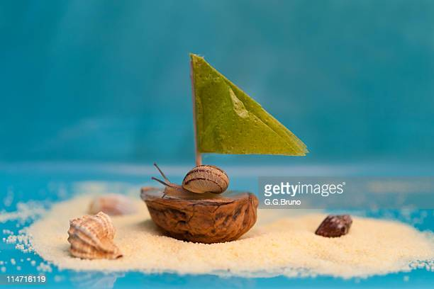 Snail on boat made from half walnut shell