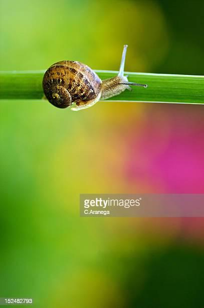 Snail on plant stem