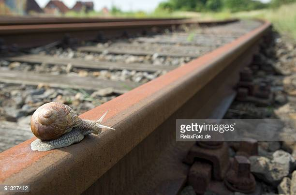 Snail on railway track (XL)
