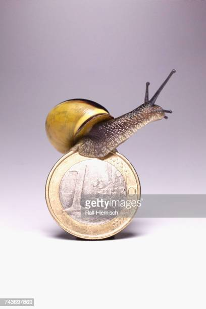 Snail on top of one Euro coin against gray background