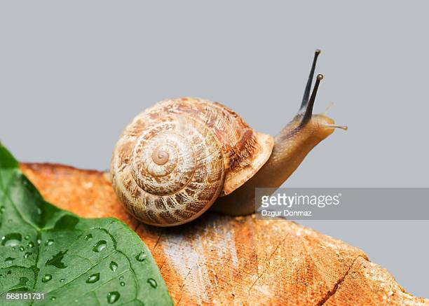 Snail on wood, close up