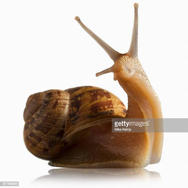 Snail out of shell