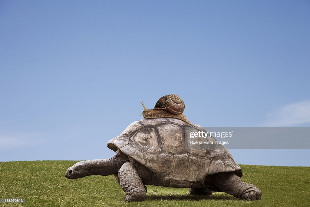 Snail over a turtle