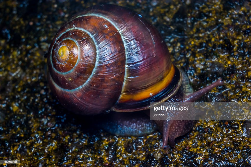 snail : Stock Photo