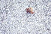 Snail walking on cement floor.