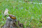 snail in the garden on sunny