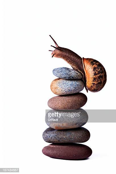 Snail reaching the top of stacked pebbles